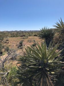 SOLD: 4279 Sage Ave., 100 Acres in Joshua Tree